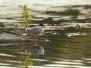bei den Flussseeschwalben